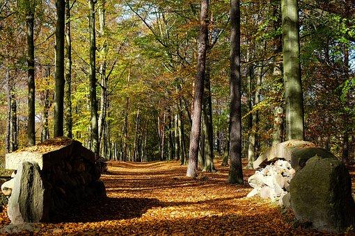 Park, Autumn, Kromlau, Leaves, Nature, Autumn Colours