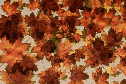 Maple, Leaves, Background, Pattern, Motif, Autumn