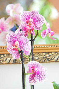 Phalaenopsis, Orchid, Orchids, Pattern, Dots, Wellness