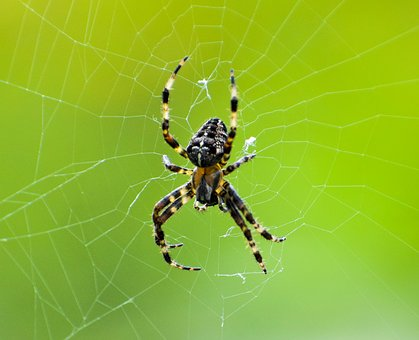 Spider, Web, To, Nature, Design, Pattern, Color, Spring