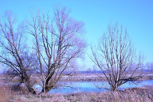 Landscape, Nature, Trees, River, River Landscape