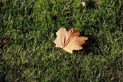 Autumn, Dry Leaves, Green Grass, Dry, Leaves, Sheet