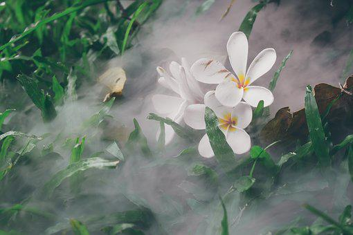 Flower, Nature, Smoke, Flowers, Flora, Plant