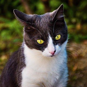 Cat, Kitty, Kitten, Feline, Tomcat, Alley Cat, Ragdoll