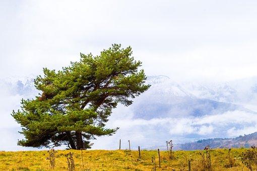 Tree, Wind, Nature, Landscape, Sky, Prairie, Autumn