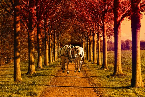 Field, Former, Tree, Green, Horses, Trolley, Wood, Path
