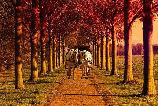 Field, Former, Tree, Green, Horses, Trolley, Wood, Path