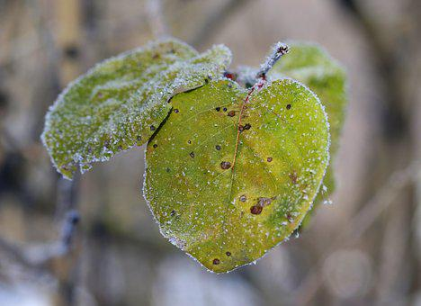 Leaf, Frozen, Yellow, Winter, Cold, Ice, Snow