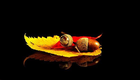 Composition, Leaf, Acorn, Autumn, Alive, Nature, Oak