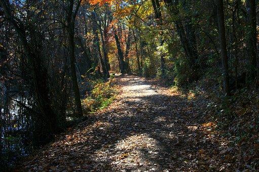 Autumn On Bona Dea Trails, Autumn, Fall, Colors