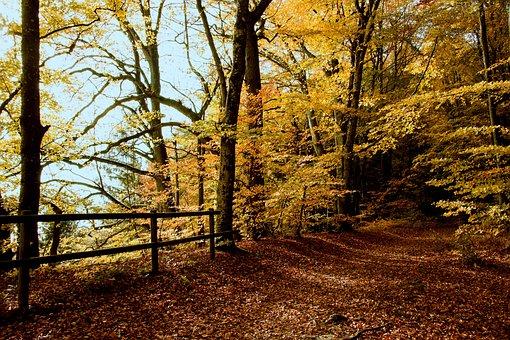 Autumn, Autumn Forest, Fall Foliage, Forest Path