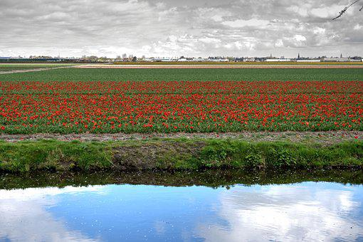 Tulips, Bed, Flowers, Spring, Park, Holland