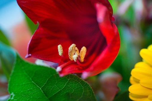 Flower, Macro, Stem, Nature, Plant, Garden, Blossom
