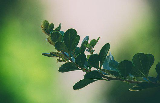 Leaves, Green, Bush, Nature, Plant, Foliage, Garden