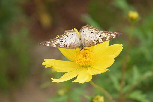 Butterfly, Flower, Natural, Insects, Animals, Summer