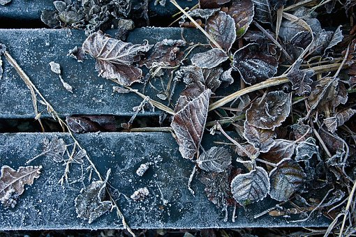Frozen, Leaf, Nature, Winter, Cold, Leaves, Frost, Ice