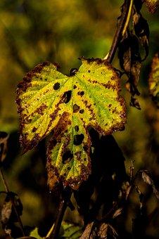 Nature, Forest, Castle Olsztyn, Alive, Color, Leaf