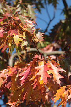 Autumn, Foliage, In The Fall, Colored, Colorful, Nature