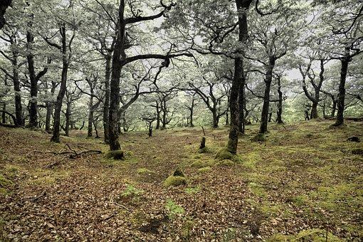 Deforestation, Forest, Oak, Nature, Environment, Trees