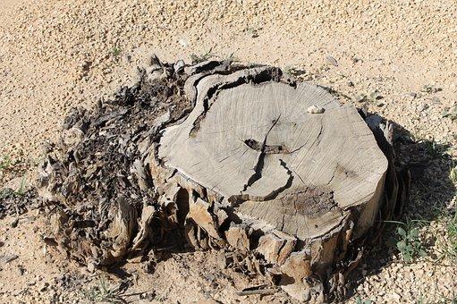 Tree Stump, Desert, Dry, Dead, Nature, Sand, Root, Old
