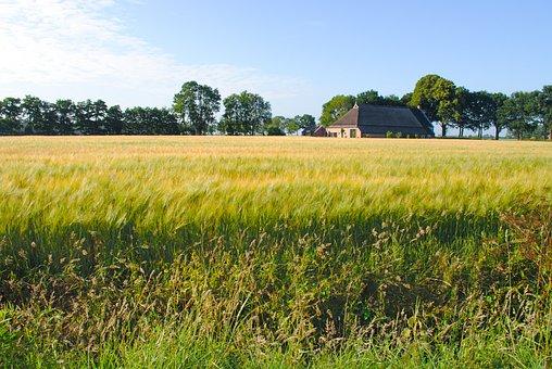 Farm, Field, Wheat, Summer, Rural, Countryside, Grass