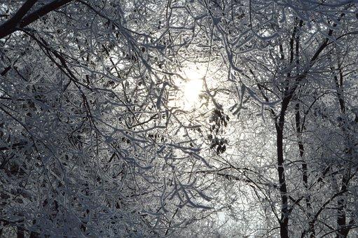 Snow, Leann, Winter, Frost, Tree, December, Sky