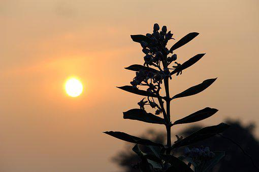 Sunset, Sunrise, Plant, Landscape, Nature, Sky, Summer