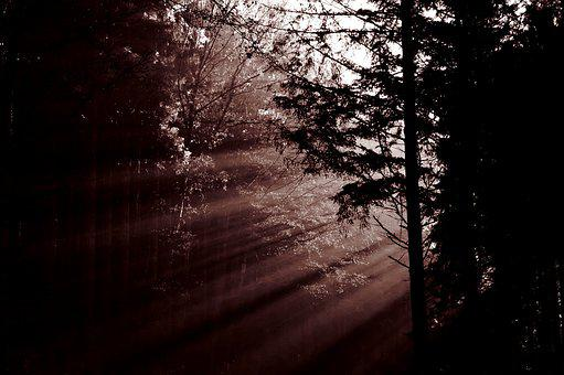 Forest, Sunbeam, Mood, Trees, Haze, Light, Atmosphere