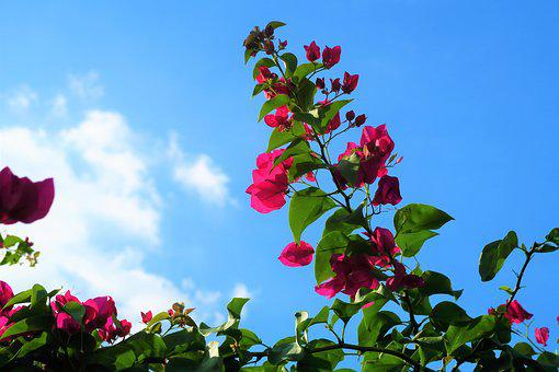 Flower, Branches, Sky, Cloud, Nature, Red, Tree, Pink