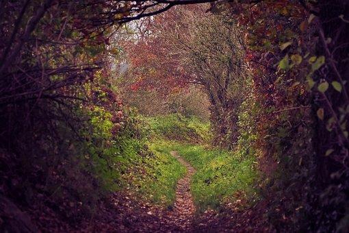Forest, Autumn, Nature, Landscape, Trees, Forest Path