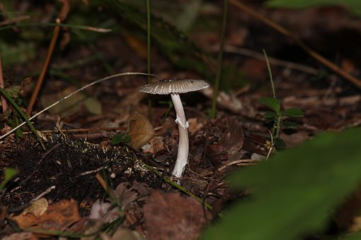 Mushroom, Toadstool, Autumn, Nature, Poisonous, Brown