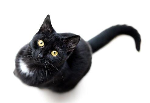 Cat, Black, Isolated, Single, Animal, Pet, Feline, Dark
