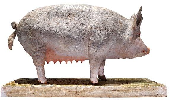 Pig, Model, Agriculture, Swine, Sow