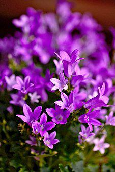 Flowers, Small Flowers, Violet, Plant, Flowering