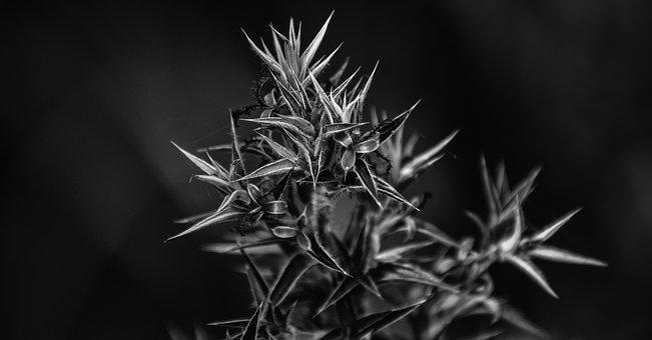 Black And White, Plant, Nature, White, Black, Flora