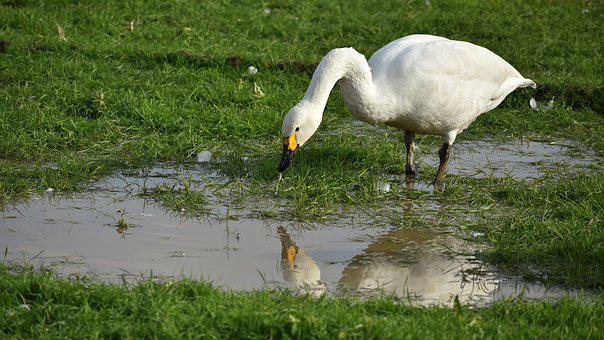Animal, Paddy Field, Puddle, Bird, Wild Birds