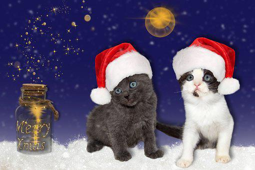 Cat, Young, Christmas, Hats, Red, Star, Christmas Time