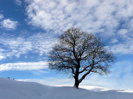 Winter, Snow Landscape, Tree, Sky, Blue White