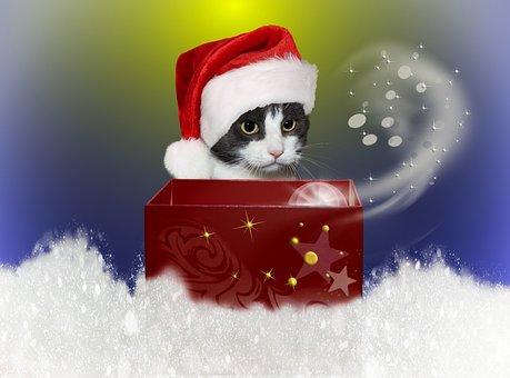 Cat, Christmas, Snow, Cardboard, Red, Star, Pet, Winter
