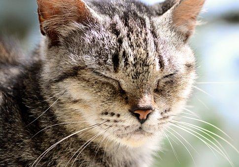Cat, Stray Cat, Animal, Stray, Mammal, Portrait