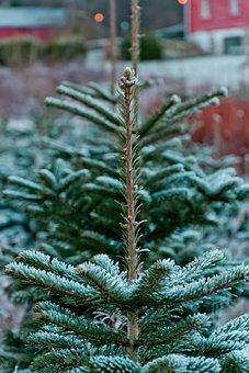Christmas Tree, Tree, Christmas, Decoration, Xmas