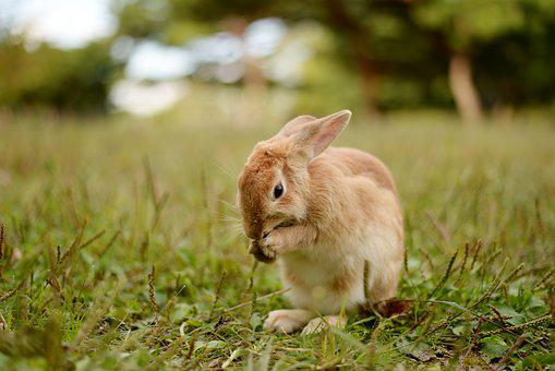Rabbit, Nature, Animal, Cute, Your, Mammals, Wild