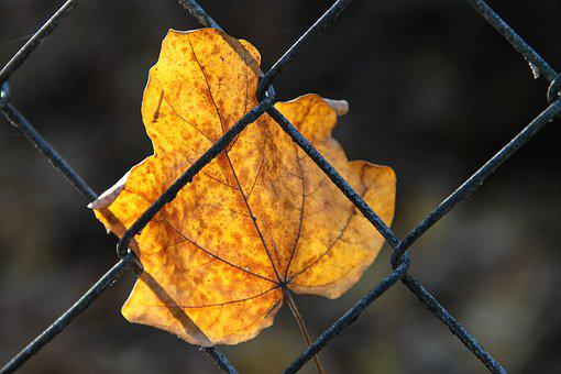 Leaf, Fence, Yellow, Autumn, Leaves, Fall Foliage