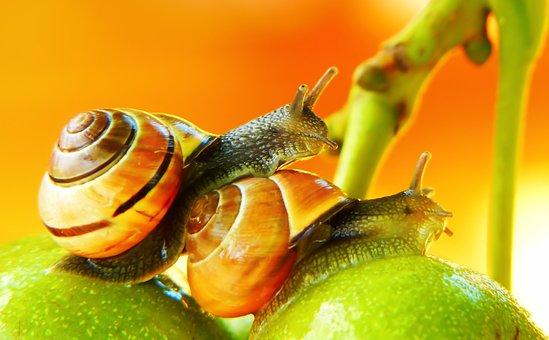 Wstężyki Gajowe, Molluscs, Fruit, Garden, Tree, Animals