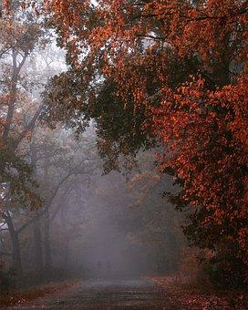 Autumn, Colors, Nature, Foliage, Mood, Forest