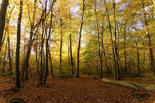 Forest, Autumn, Sun, Light, Bright, Shining, Leaves