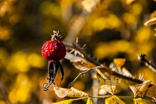 Nature, Olsztyn, Forest, Spacer, Autumn, Season, Mood