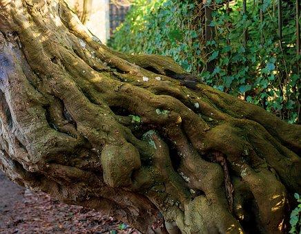 Tree, Tribe, Old, Root, Gnarled, Overgrown, Log, Bark
