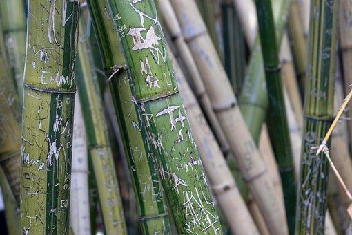 Bamboo, Graffiti, Green, Carving