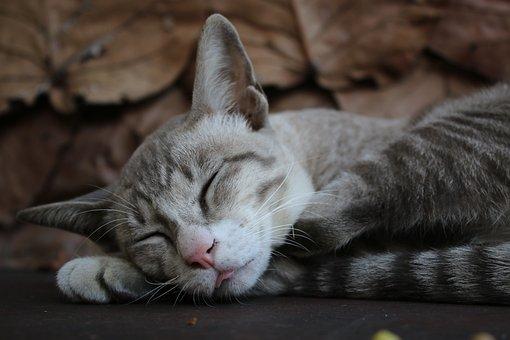 Cat, Sleep, Hairy, Top, Grey, Gray, Color Ash, Nice